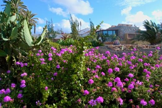 ecologic holiday fuerteventura5