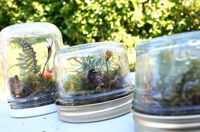 recycling glass terrarium